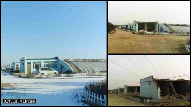 Pflanzenzuchtanlagen in der Stadt Hohhot vor und nach ihrer Zerstörung.